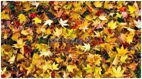 Kaip greitai atsikratyti lapų?