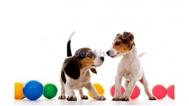 Essential animal care products. How to choose?